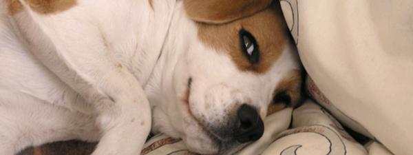 bayernhunde - Hundeerziehung
